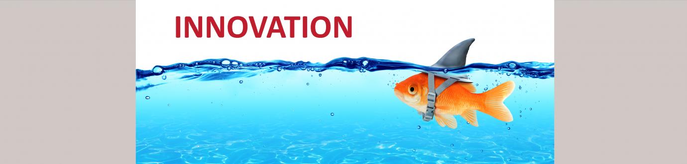 3-Innovation Goldfish
